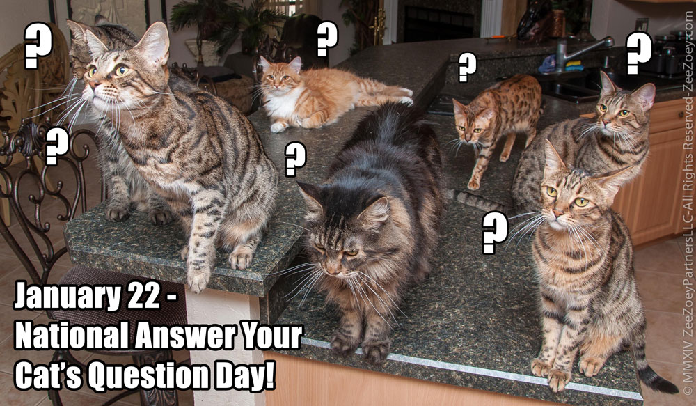 Answer Your Cat's Question