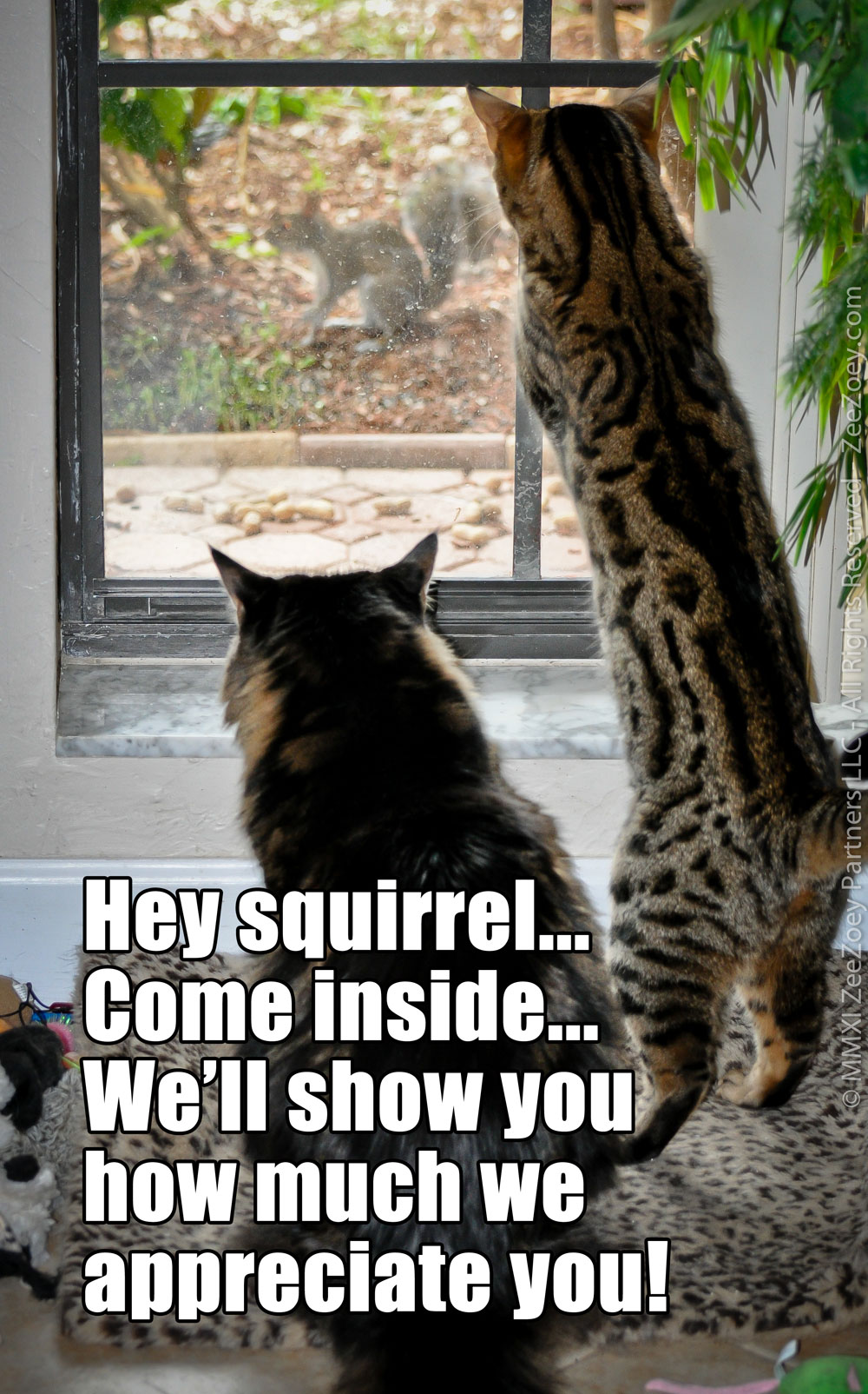squirrel-day-2