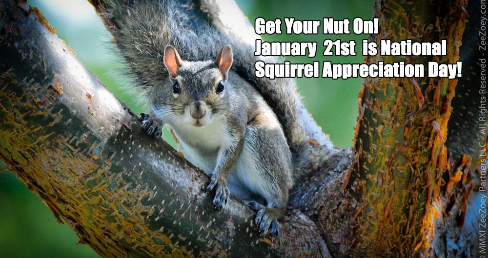 squirrel-day