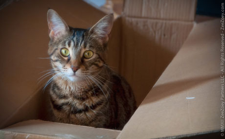 Save old boxes and turn them into scratching pads for your cat is a great way to recycle for Earth Day