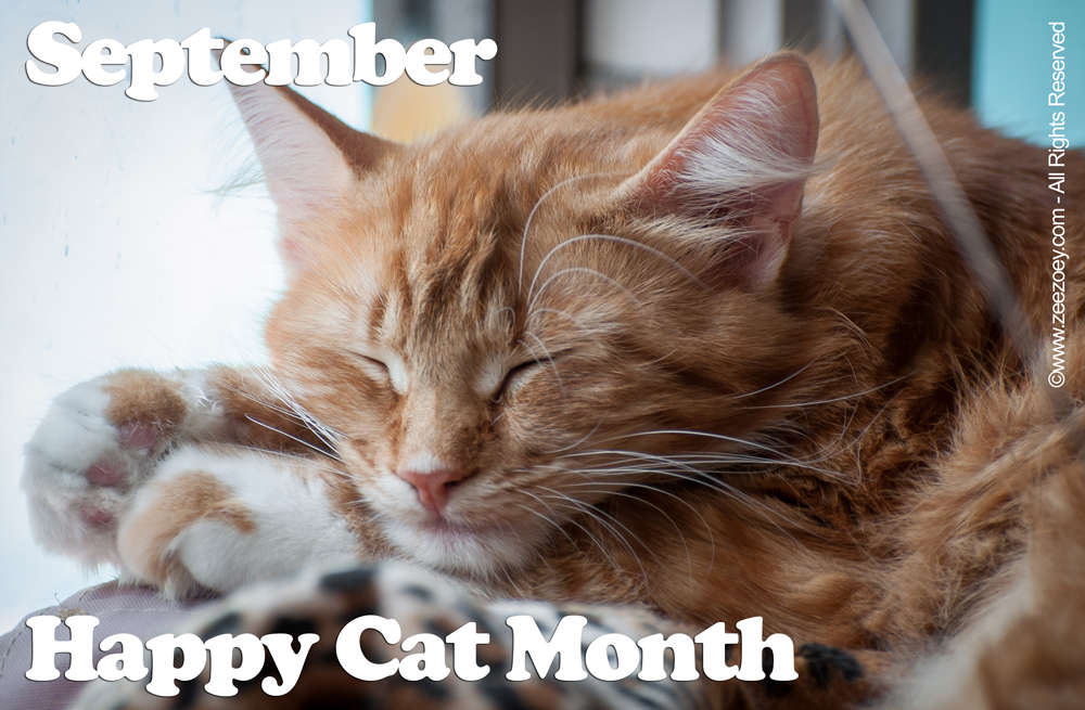 Four Paws Up For September Happy Cat Happy Me Zee