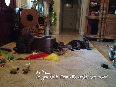 9.Cat-mess