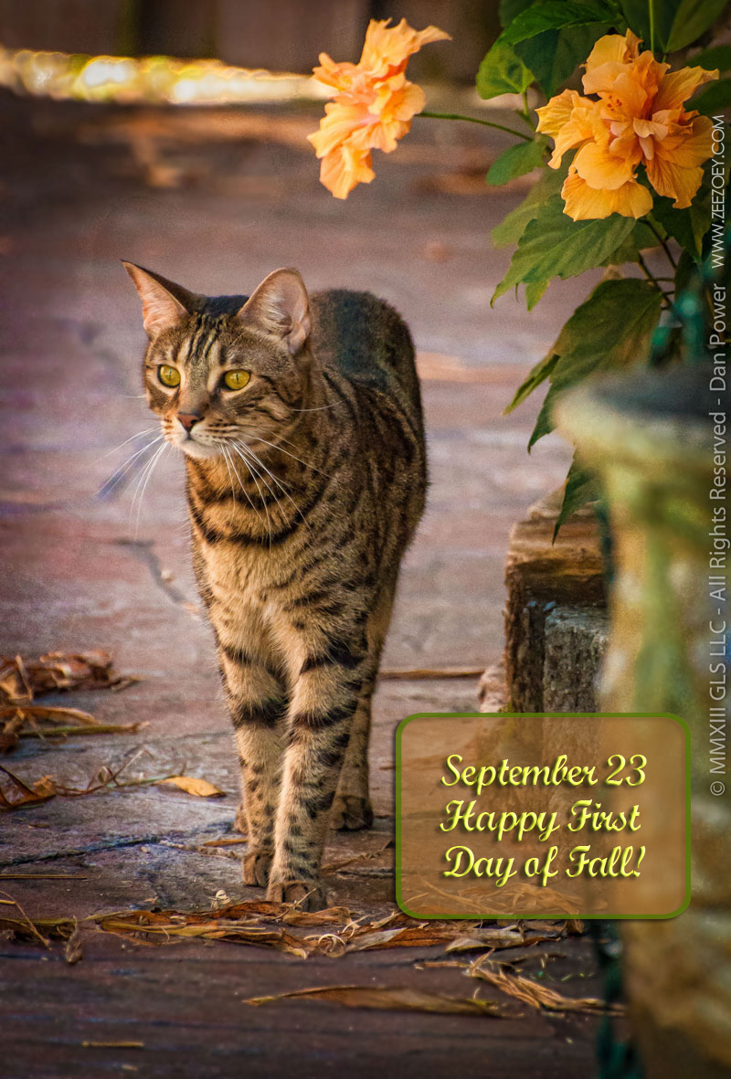 """Résultat de recherche d'images pour """"happy autumn pictures"""""""