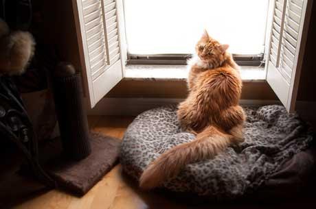 Jazmine at window