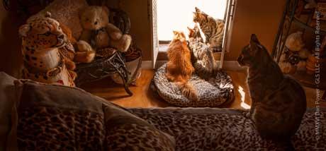 Zee & Zoey cats at window