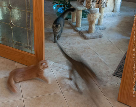 Cats fueled by zoomies!