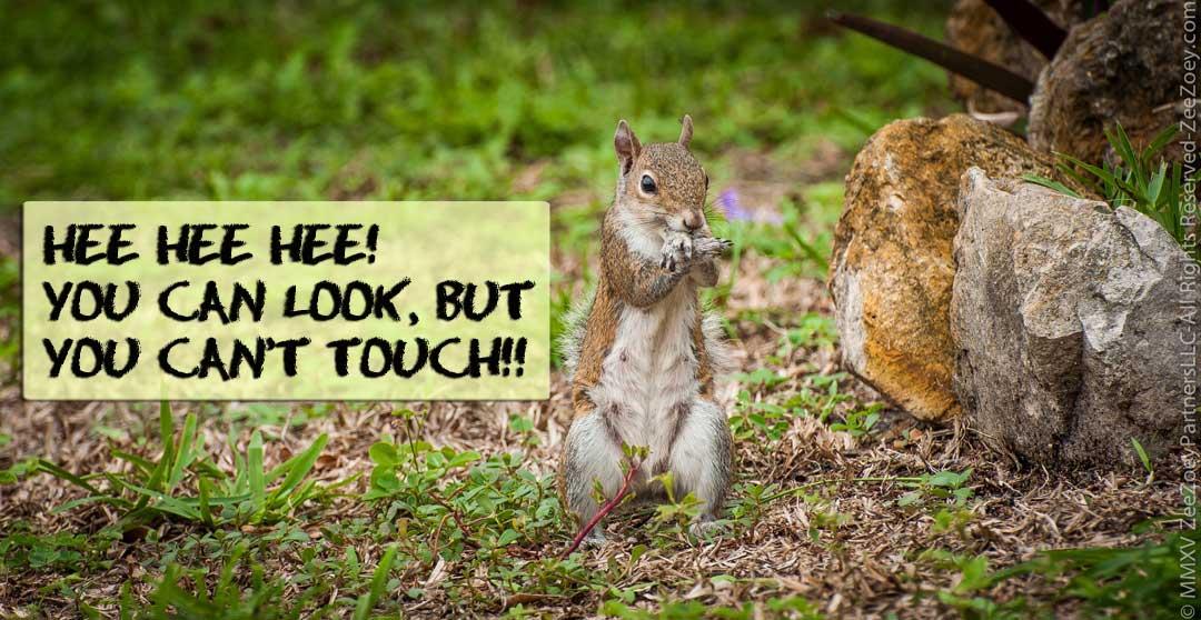 Zee & Zoey - Squirrel