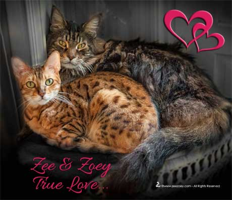 Cats can fall in love for life