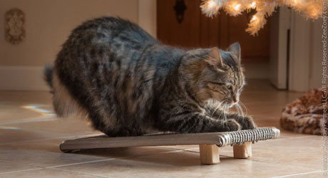 Providing a cat with proper scratching boards can eliminate the need for dangerous declawing