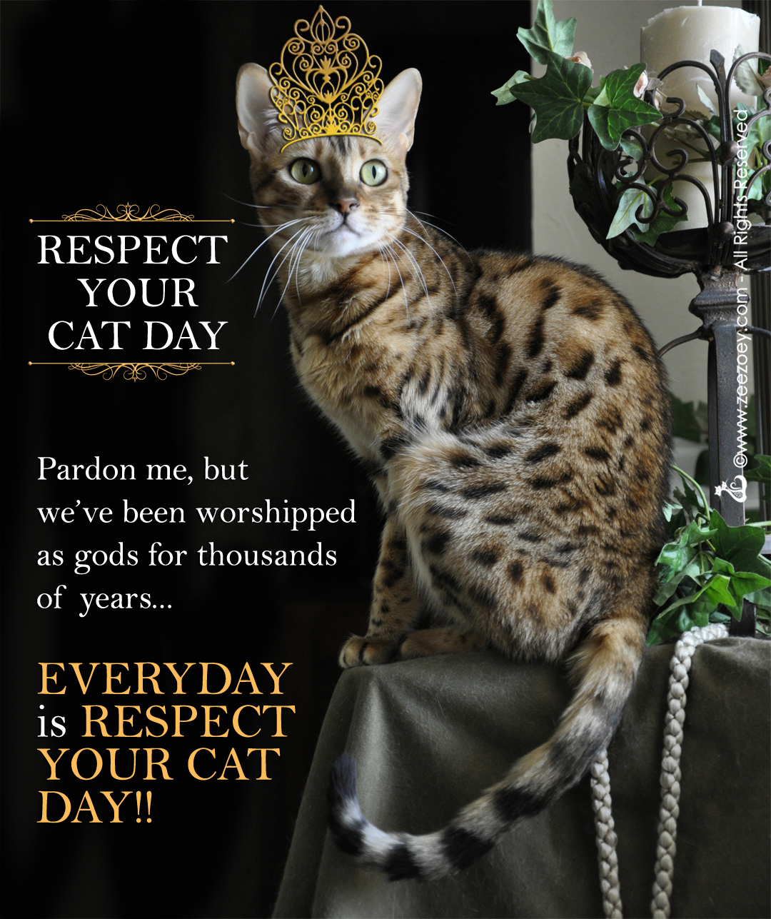 Ways to show your cat you respect them for Respect Your Cat Day