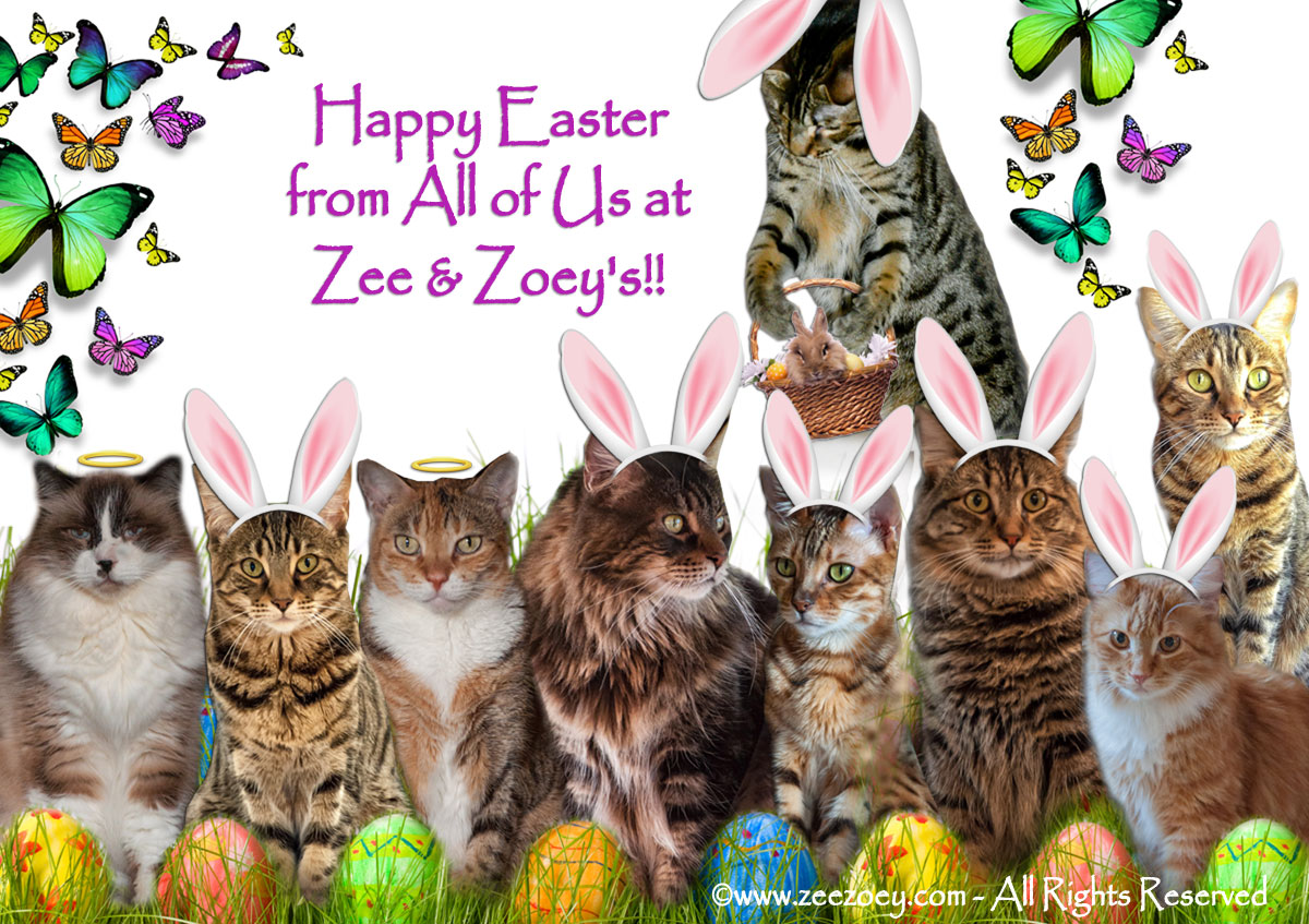 The Zee and Zoey cats celebrate Easter!