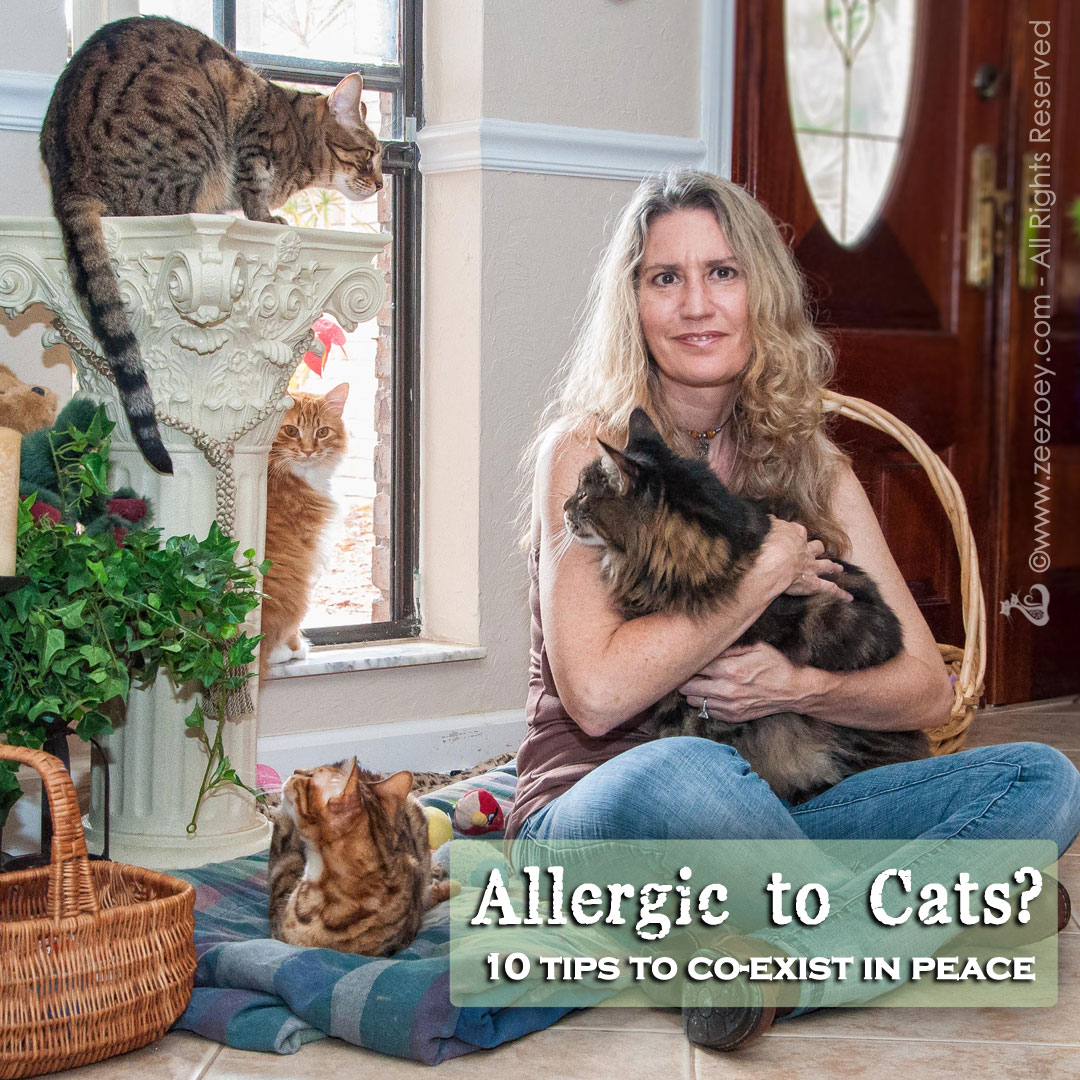 By trying different tips and techniques, there are ways to manage cat allergies and peacefully co-exist with a cat.