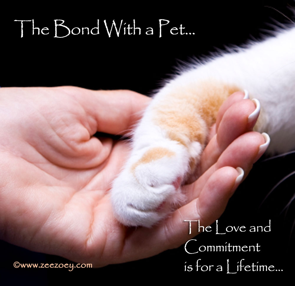 There are so many reasons to love a pet - companionship, friendship and more