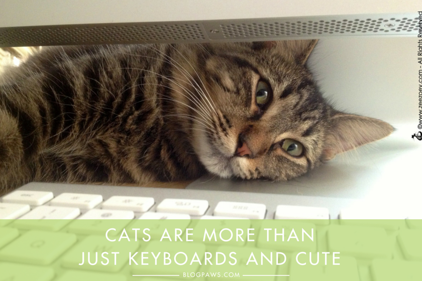 Cats-are-more-than-just-keyboards-and-cute