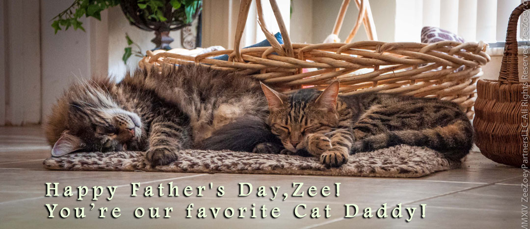 Happy fathers day to cat daddys everywhere zee zoeys cat zee and his daughter peanut such a sweet and peaceful moment sciox Gallery