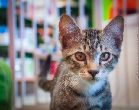 Cats living in shelters deserve a good home