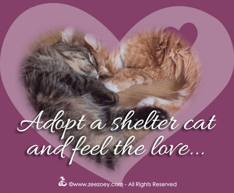 Adopting more than one cat at a time can be a good idea.