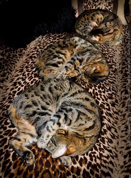 10.kittens