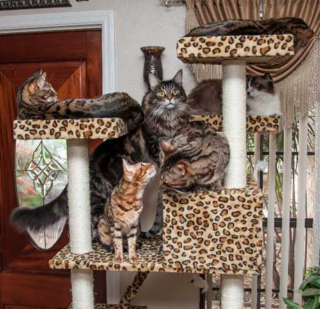 cats on condo