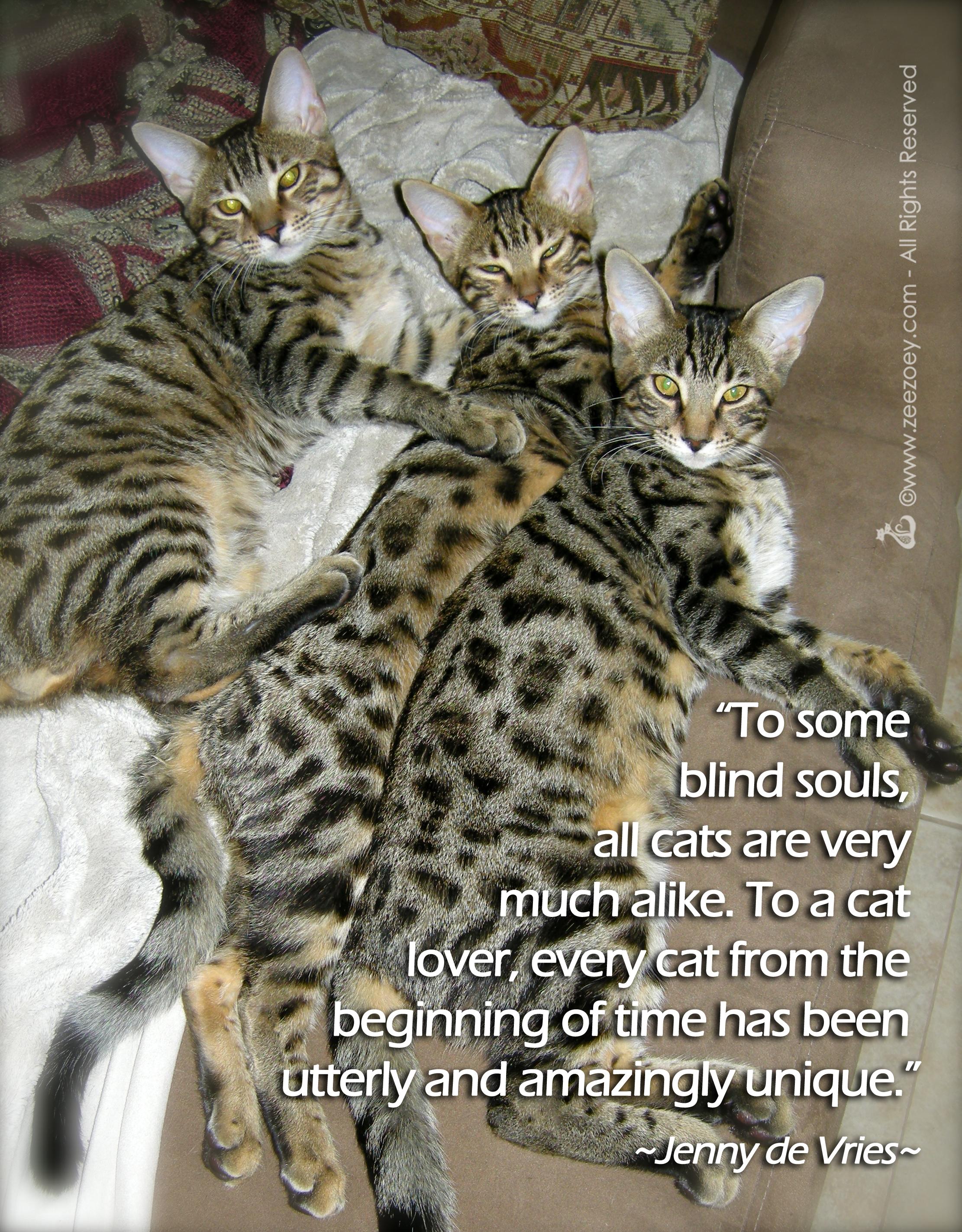 KittensBD