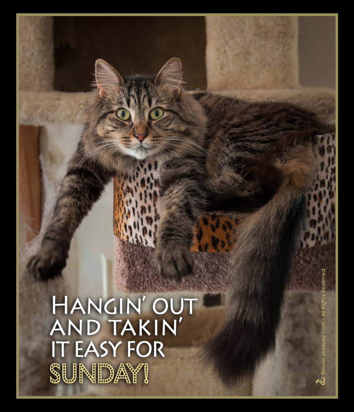 Cat: The Art Of Easy Sunday - Cat Style!