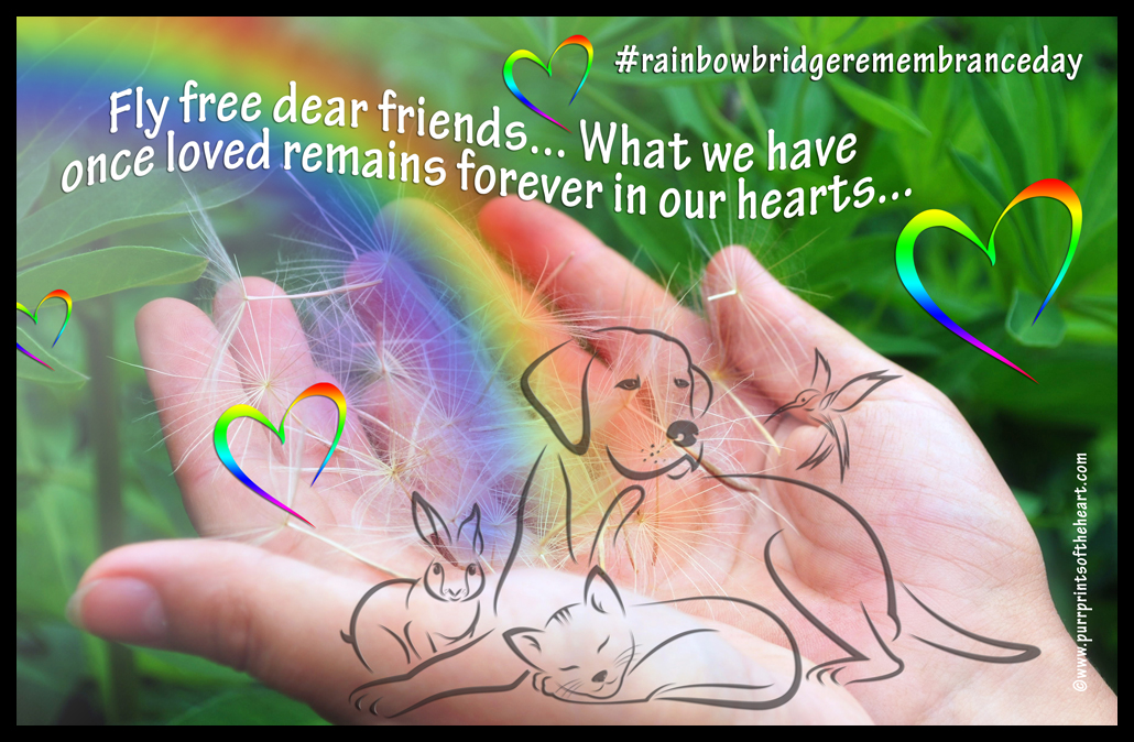 #rainbowbridgeremembranceday